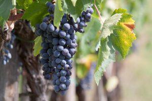 wine-989268_960_720
